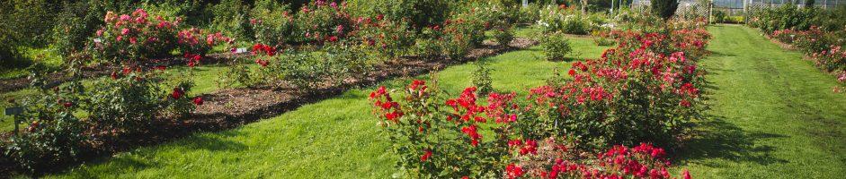 Põltsamaa Rose garden
