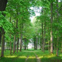 Uue-Põltsamaa mõisa park | Teele Kaeramaa